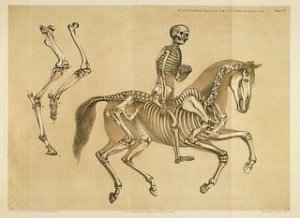 Rider and horse
